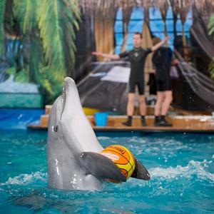 Дельфинарии, океанариумы Багаевского