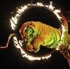 Цирки в Багаевском