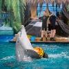 Дельфинарии, океанариумы в Багаевском