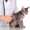 Ветеринарные клиники в Багаевском